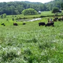 Grass Fed Beef and Pastured Dairy